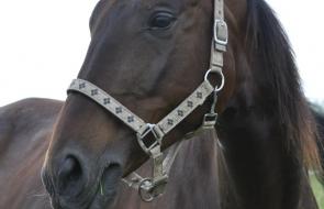 Konie-dwor-trzesniow (12)