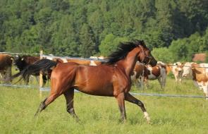 Konie-dwor-trzesniow (14)