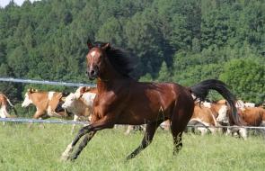 Konie-dwor-trzesniow (16)