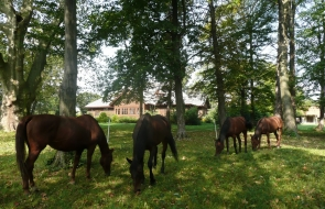 Konie-dwor-trzesniow (18)
