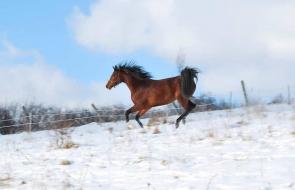 Konie-dwor-trzesniow (3)