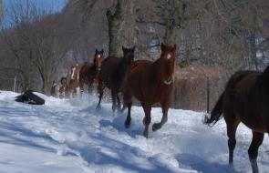 Konie-dwor-trzesniow (5)
