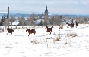 Konie-dwor-trzesniow (6)