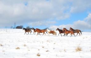 Konie-dwor-trzesniow (7)