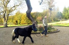 Konie-dwor-trzesniow (9)